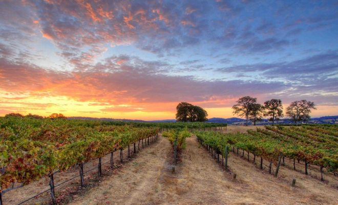 Avoid the Napa crowds when you head to these undiscovered vineyards